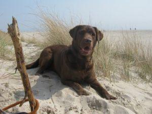 Ferien mit Hund in Dänemark?