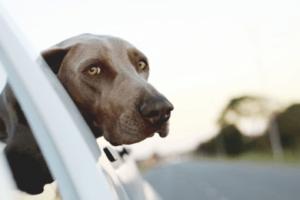 Beliebte Reiseziele mit Hund – ein Überblick