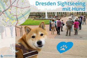 Getestet: Wie hundefreundlich sind Dresdens Sehenswürdigkeiten?