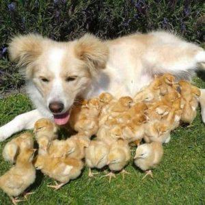 Bauernhof Urlaub mit Hund – ein Spaß für die ganze Familie