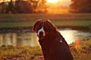 Herbstferien mit Hund