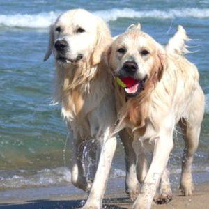 Aktuelle Angebote für Ihren Ferienhaus Urlaub mit Hund am Wasser