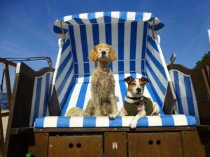 Ferien auf Rügen mit Hund