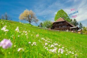 Ferien mit Hund im Schwarzwald