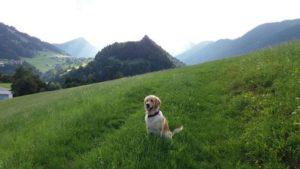 Ferien mit Hund Nordrhein-Westfalen mit Hund