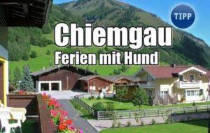 Ferien mit Hund im Chiemgau