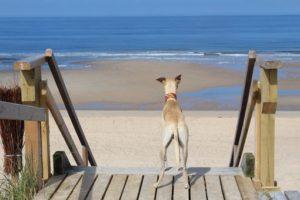 Nordseeinsel Sylt – Ferien mit Hund auf Sylt