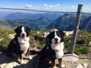 Ferien mit Hund in Sachsen und gemeinsam Hundeurlaub erleben
