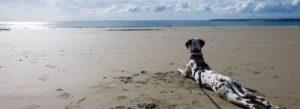 Ferien mit Hund auf Borkum