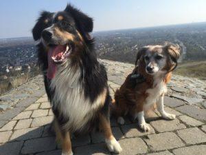 Ferien mit Hund – Urlaub in Rheinland-Pfalz