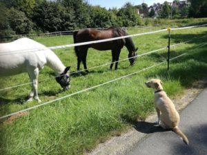 Ferien mit Hund im Hunsrück