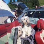 Familienurlaub mit Hund — Die besten Tipps für die Planung