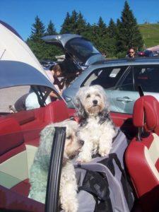 Reisevorbereitungen für die Autoreise mit Hund