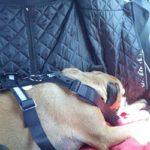 Kaspers Reiseführer – Sicherheit für 4 Pfoten beim Reisen im Auto