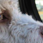 So vermeiden Sie Reisestress beim Hund