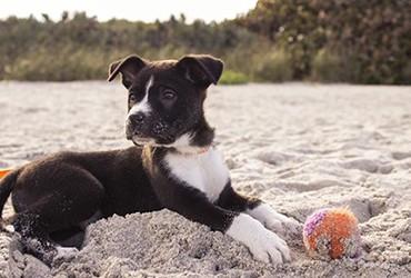 Strandurlaub mit Hund: Top-Ziele an Nord- und Ostsee