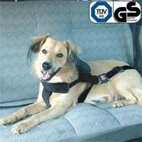 Hund im Auto auf Reise ins Ferienhaus