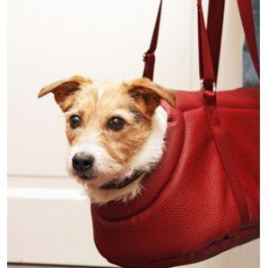 Bahnreise mit Hund