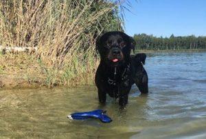 Ostseeurlaub gemeinsam mit dem Hund