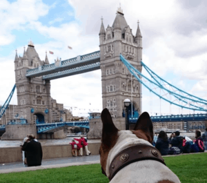 England mit Hund