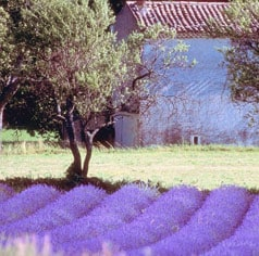 Ferien mit Hund in Frankreich