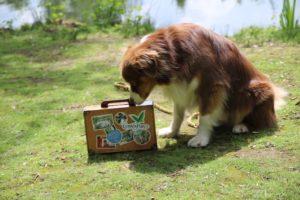 Ferienpark Urlaub mit Hund