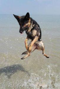 Ferien mit Hund in Kroatien