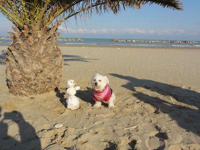 Mallorca mit Hund