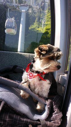 Ferien mit Hund in Österreich