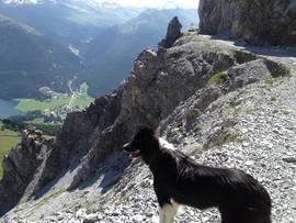 Ferien mit Hund in der Schweiz