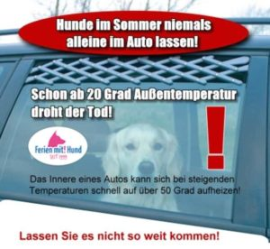 Autoreise mit Hund im Sommer