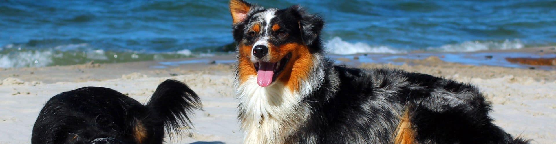 Ferien mit Hund an der Ostsee