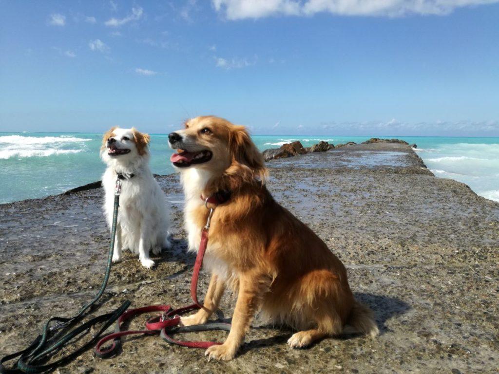 Kaspers Reiseführer - Reif für die Insel Mallorca