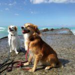 Kaspers Reiseführer – Reif für die Insel Mallorca