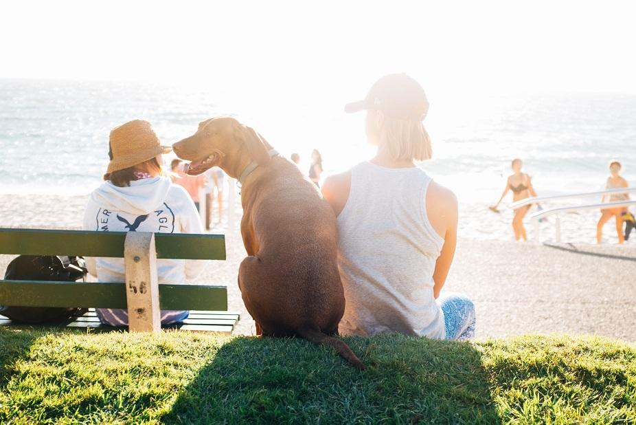 Luxusurlaub mit Hund