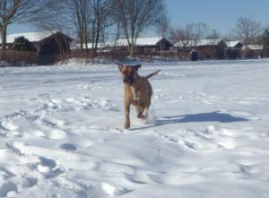 Kaspers Reiseführer – Winterurlaub mit Hund in Deutschland