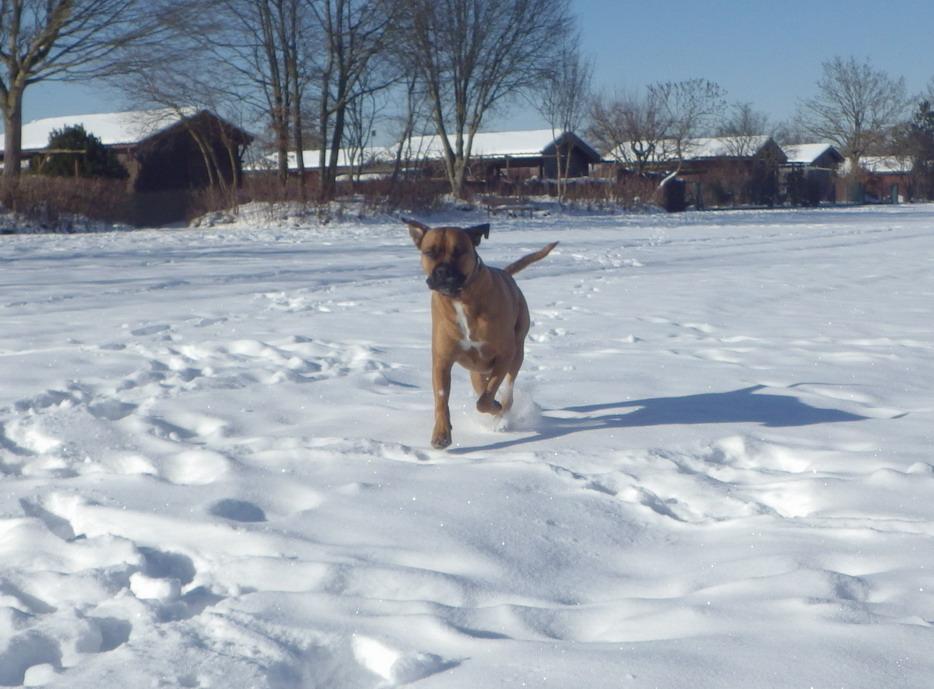 Winterurlaub mit Hund in Deutschland