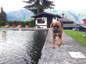 Sommer Urlaub mit Hund planen