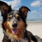 Insel Urlaub mit Hund