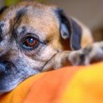 Urlaubsträume mit Hund