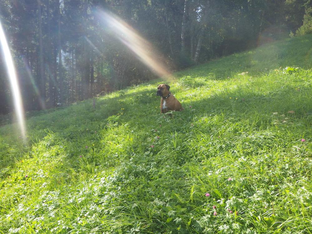 Urlaub mit Hund im Herzen von Deutschland