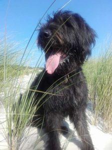 Inselurlaub mit Hund