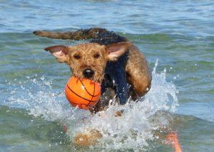 Urlaubsknigge für den Hundestrand
