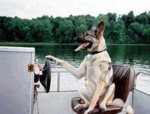 Ferien mit Hund auf einem Hausboot