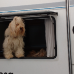 Urlaubsreise mit Wohnwagen & Hund