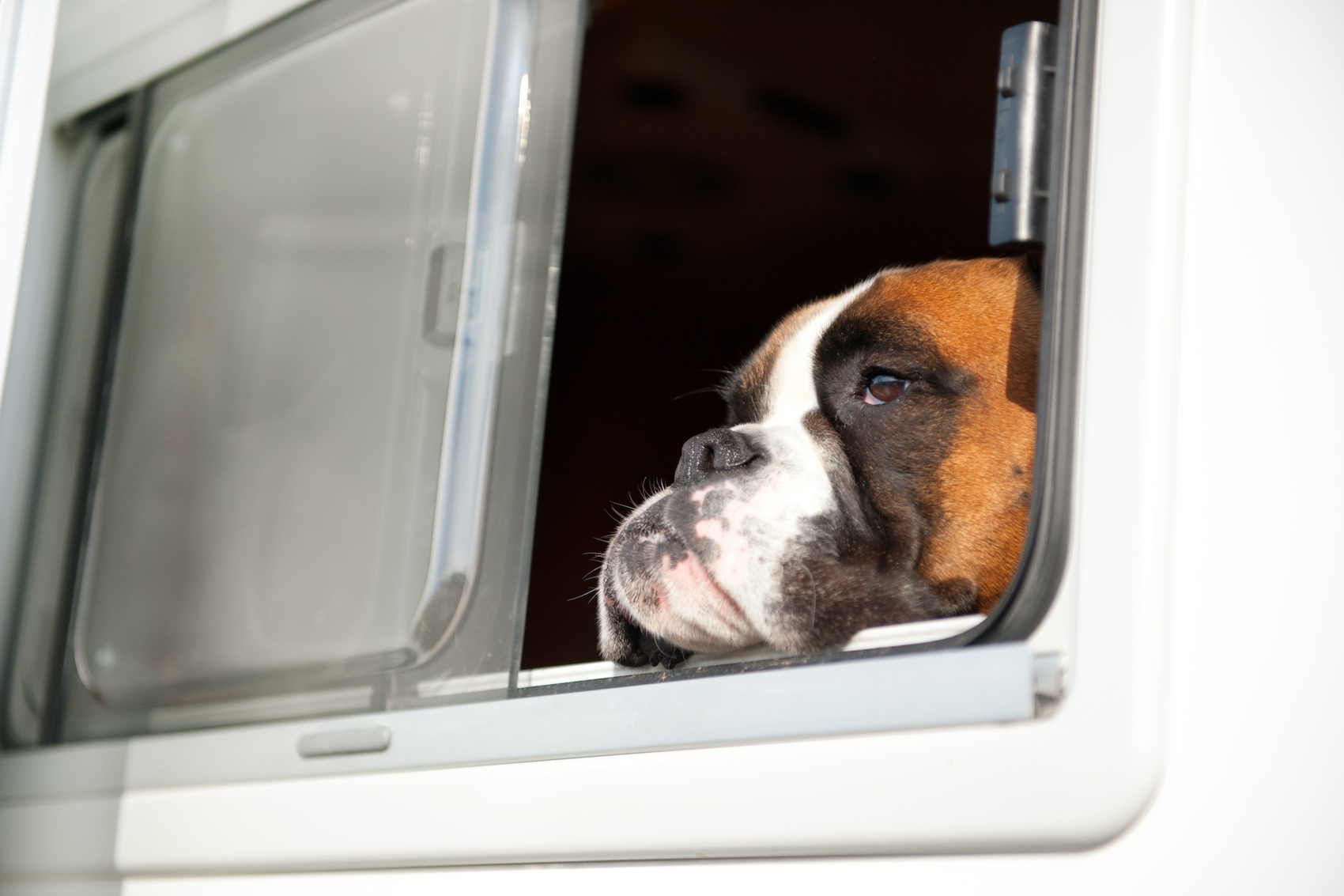 Read more about the article Campingurlaub mit Hund
