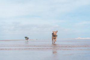 Urlaub an der Nordsee mit dem Hund
