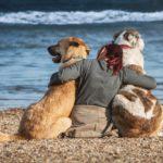 Gedanken vor Urlaub mit Hund