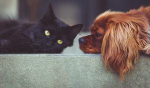 Tierkrankensicherung