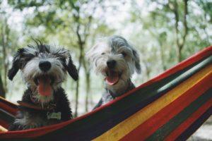 6 Tipps für die richtige Hundeernährung auf Reisen